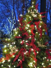 Merry Christmas to all of my Flickr Friends! (Cher12861 (Cheryl Kelly on ipernity)) Tags: christmastreeatmortonarboretumfrom2010 bluehour holiday decorations explored madeexplore433 noel joy peace love gratitude joyeuxnoël buonnatale fröhlicheweihnachten ¡feliznavidad godjul christmastree
