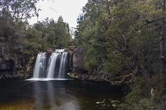 Pencil Pines Falls, Tasmania (Steven Penton) Tags: tasmania australia cradle mountain pencil pines waterfall
