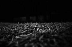 Frozen (richard_wohlfarth) Tags: winter photographer prakticabx20s praktica photography planet plants plant blackandwhite blackwhite black white berlin berliner bx20s ice snow iced grey germany german grass light nightlife lights night analog 35mm dark darkroom artforsale atomal49 art nature landscape halloween analogue dead cold contrast creepy film filmphotography fineart filmisnotdead leafs richardwohlfarth wohlfarth richard crystals