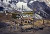(toeytoeytoeytoeytoey) Tags: travel trekking trek hike hiking himalaya himalayas asia nepal winter december nature adventure annapurna basecamp base camp masif landscape walking