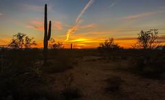 Dawn in the White Tanks (Brian Just Got Back From...) Tags: whitetankmountains phoenix arizona sunrise cactus horizon