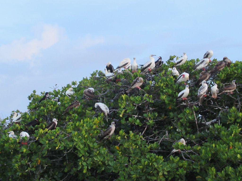 アルダブラ環礁の画像 p1_35