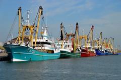 Haven van Oudeschild (l-vandervegt) Tags: haven holland colour netherlands boot boat waddeneiland nikon harbour nederland fishingboat paysbas texel noordholland niederlande オランダ kleur vissersboot 2015 荷蘭 oudeschild paísesbajos belanda paesibassi d3200 هولندا нидерланды niderlandy