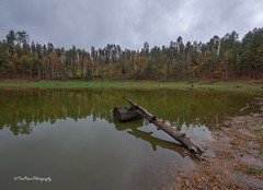 Time Doesn't Wait (TreeRose Photography) Tags: autumn trees lake water reflections pond log cloudy foliage