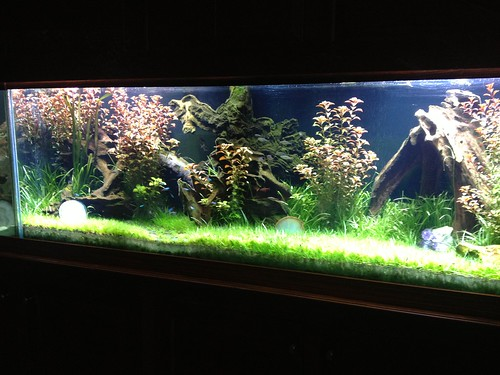 Live Planted Aquarium - Private Residence - CT - 3