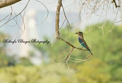 #bird #birds #creek_park #dubai_creek_park #photography #myphoto #dubai #uae #الإمارات #دبي #حديقة_الخور #حديقة_خور_دبي #طائر #طيور #طير #تصوير #فوتوغرافي (alrayes1977) Tags: bird birds photography dubai uae myphoto الإمارات دبي تصوير طير creekpark طيور حديقةالخور طائر فوتوغرافي dubaicreekpark حديقةخوردبي