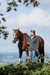 DSC08419_s (AndiP66) Tags: horse mark sony sp ii di if af alpha tamron pferde 77 pferd equestrian f28 ld 70200mm tamron70200 andreaspeters tamronspaf70200mmf28dildif 77m2 a77ii ilca77m2 77ii slta77ii