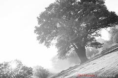 Hatfield_Forest-40 (Eldorino) Tags: park uk morning autumn trees nature forest sunrise landscape countryside nikon britain centre jour hatfield bishops stortford essex hertfordshire stanstead hatfieldforest