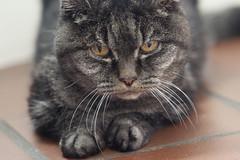 Cat (wietsej) Tags: zeiss cat sony 135 18 za sonnar a900 13518 wietsejongsma