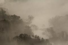 fog. (Explored) (anemon :)) Tags: autumn mist tree fog