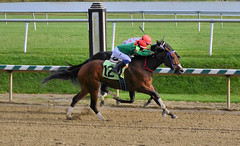 "2015-11-11 (64) r6 Javien Toledo on #12 Chica Fabulosa (JLeeFleenor) Tags: photos photography md marylandracing marylandhorseracing laurelpark jockey جُوكِي ""赛马骑师"" jinete ""競馬騎手"" dżokej jocheu คนขี่ม้าแข่ง jóquei žokej kilparatsastaja rennreiter fantino ""경마 기수"" жокей jokey người horses thoroughbreds equine equestrian cheval cavalo cavallo cavall caballo pferd paard perd hevonen hest hestur cal kon konj beygir capall ceffyl cuddy yarraman faras alogo soos kuda uma pfeerd koin حصان кон 马 häst άλογο סוס घोड़ा 馬 koń лошадь maryland"