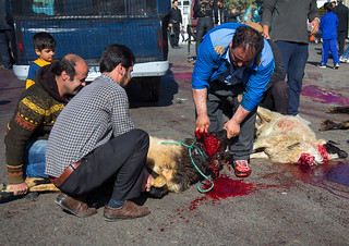 shiite muslim men are ritually killing a sheep during ashura, the day of the death of imam hussein, Kurdistan Province, Bijar, Iran
