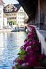 Kapellbrücke Flowers (LukeStonesPhotos) Tags: bridge flowers roses tower water buildings river switzerland luzern lucerne lakeluzern lakelucerne kapellbrücke reuss riverreuss