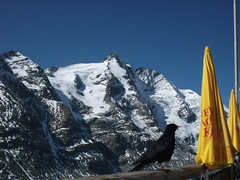 FILE0155 (edelmauswaldgeist) Tags: schnee krnten vogel schirme gelnder