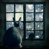 Another year has gone by (Jeric Santiago) Tags: christmas pet rabbit bunny window animal conejo newyear goodbye lapin longing lookingback wistful kaninchen うさぎ 兎 compositephotography conceptualphotography fineartsphotography winterrabbit