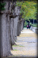 ... tanto da percorrere (FranK.Dip) Tags: roma tree alberi relax natura albero acqua brindisi mattino sogno sogni passeggiata viale desiderio desideri tranquillit spettacolare frankdip