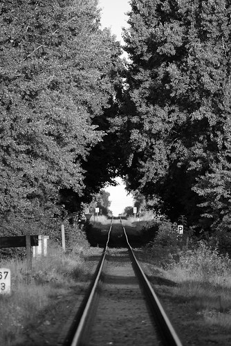 railway tree tunnel