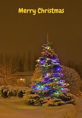 Jólakveðja (skolavellir12) Tags: christ christmas christmastree iceland jól jólasnjór raw selfoss snow tree