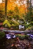 Fall Colors - Black Forest, Germany (kevingomes1) Tags: autumn yellow trees leaves october forest water beautiful fall leaf colors green wood black little germany falls stream moss waterfalls schwarzwald badenwürttemberg