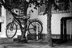 How high (Go-tea 郭天) Tags: canon eos 100d 50mm street urban city china qingdao asia outside outdoor monochrome bw bnw black white blackwhite blackandwhithe tree hanged bike bicycle old abandoned alone wired how try understand reason why wheels air fly flying parked locked strange situation mysterious stange