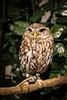 20161231-IMG_5063 (stringer8247) Tags: owl forest harajuku tokyo japan
