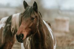 OBP_2813 (owenbarnfield) Tags: lrthefader d5 nikon lxc lightroom gloucester horse photograph photographer photography photo vrii zoom sharp edited filmlike presets tweaked horses