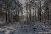 Winter in Nederland (Chantal van Breugel) Tags: landschap winter nationaalpark de hoge veluwe 2017 gelderland canon5dmark111 canon1635