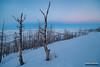Charred Slope (kevin-palmer) Tags: bighorn sheridan bighornnationalforest bighornmountains january winter snow snowy evening irix15mmf24 twilight beltofvenus pink blue sky snowshoeing burnt trees nikond750