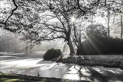 zonnestralen (willy.sybesma) Tags: willysybesmafotografie wit vrij werk