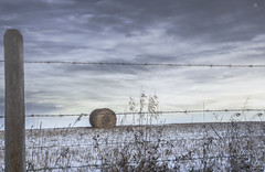 i'll wait (rockinmonique) Tags: 52in52 alberta prairie feild winter bales fence blue sky moniquew canon canont6s sigma copyright2017moniquew