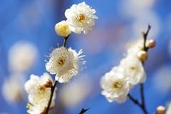 DSC08753 (@saka) Tags: autoupload leaves 599602 flowers 43324338 trees 52 street 4751