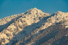 Dusted (Karen McQuilkin) Tags: wasatch snow peaks winter ski karenmcquilkin