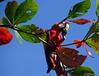Guacamayo Municipio de Tortuguero Costa Rica 10 (Rafael Gomez - http://micamara.es) Tags: guacamayos guacamayas guacamayo guacamaya loro ara rojo animales fauna municipio de tortuguero costa rica animal al aire libre suelto pueblo poblacion