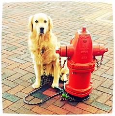 Patiently wating for her owner. (architekt2) Tags: dog waiting for her owner fire hydrant mansbestfriend