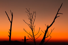 Details (Kevin Stewart Photography) Tags: silhouette gsmnp greatsmokymountains greatsmokymountainsnationalpark smokies smokymountains tennessee easttennessee northcarolina canon canon6d canon70200mm