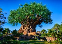 Tree of Life (jbwolffiv) Tags: treeoflife discoveryisland disneysanimalkingdom animalkingdom dak disney disneyworld disneywdw d7200 waltdisneyworld wdw wolff johnwolff nikon