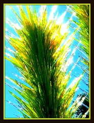 let there be light (milomingo) Tags: chihuly art glass desert southwest phoenix arizona garden desertbotanicalgarden sculpture arid green photoart frame photoborder