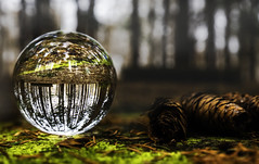 Rain (patkelley3) Tags: crystal forest trees pine pinecones green bokeh ball glass