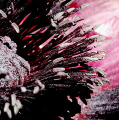 The poppy session #3 (cattycamehome) Tags: pink red flower tag3 taggedout tag2 all tag1 purple blossom centre  rights stamen poppy pollen dust reserved catherineingram 4aces june2006 cattycamehome allrightsreserved
