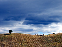 Unusual storm in June (Maxresolution) Tags: sky italy storm tree june clouds landscape interestingness sienna tuscany siena toscana valdorcia topf100 1500v60f explore18 finestofvaldorcia