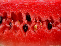 para los panas - for the friends (ruurmo) Tags: red 15fav macro fruit 1025fav rouge rojo venezuela ruurmo caracas watermelon melancia fruta babel 1on1 sanda watermeloen patilla wassermelone semilla citrullusvulgaris cucurbitceas