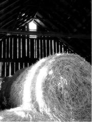 I Need Light! (Sandra Freyler) Tags: county old ohio building abandoned nature barn landscape farm hay clermont