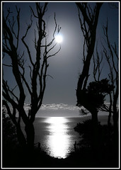 Marvellous Night For A Moondance - Jervis Bay Australia (down_the_rabbit_hole) Tags: ocean moon nature water silhouette night canon landscape ilovenature quality wave fullmoon nsw moonlight top20moonshots lunar jervisbay qaulity magicdonkey 82points 3000v120f fivestarsgallery top2020 geoffcoleman abigfave p1f1 fcsea 1500f60v 25percentmagicdonkeysolutiongroup flickrphotoaward bestofaustralia