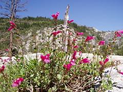 20060617 Wildflowers