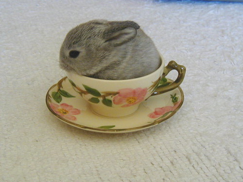 Teacup bunny 8-8-01 / rabbits on chairs