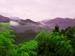 Purple Mountain's Travesty Dishsoap () Tags: photoshoppery purpleandorgreen