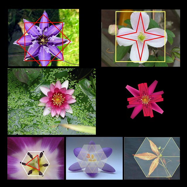 On the Geometry of Flowers