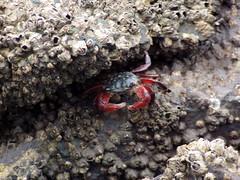20060625 Crab