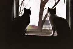 Eli & Sammy May 2006 (M&M's Page) Tags: cats animals kitties