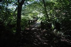 Sally and the Bridge (DanSteingart) Tags: summer beachproject